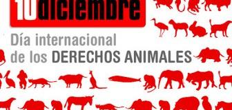 10 de diciembre: Día Internacional por los Derechos Animales