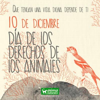 banner dia derechos animales twitter instagram
