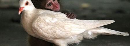 ¿Amor hacia los animales?