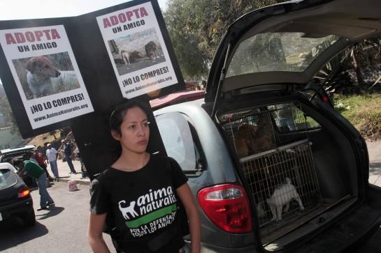 PROTESTA DE ANIMANATURALIS CONTRA LA VENTA DE PERROS EN PERISUR