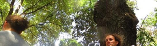 Encadenados para salvar árboles en la delegación Benito Juárez