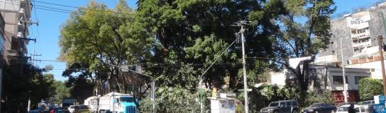 Encadénate a un árbol para salvarlo
