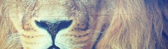 Cómo salvar un león y no morir en el intento