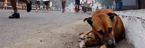Perros de carretera
