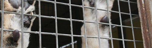 Circos sin animales en Querétaro