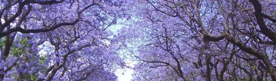 Los árboles: guerreros urbanos