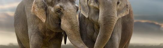 Circos sin animales en el Distrito Federal