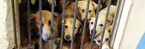 Amparo para evitar el sacrificio de animales