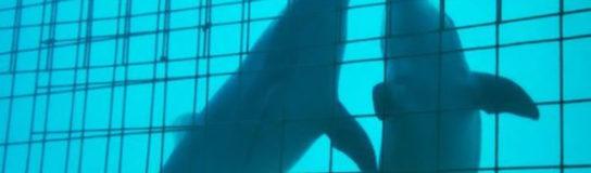 PVEM condena delfines a 50 años de prisión