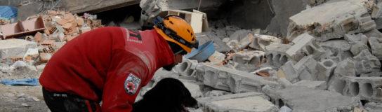 Animales y catástrofes naturales