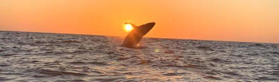 La ballena que jugaba a la pelota con el sol